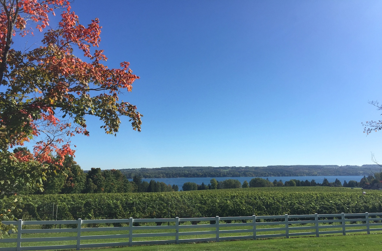 Vineyard overlooking Seneca Lake